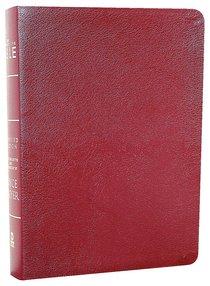 Amplified Joyce Meyer Everyday Life Bible Burgundy